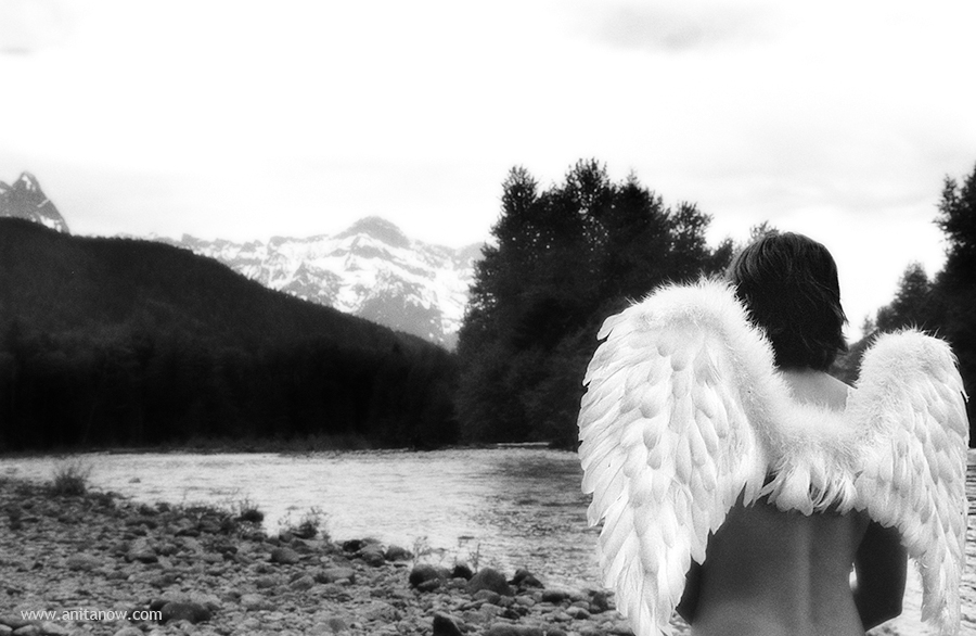Bird Wings 35mm Film