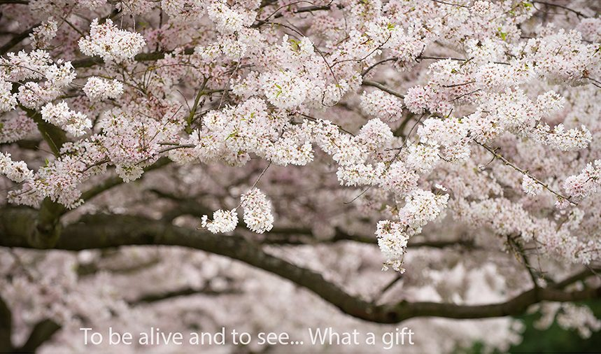 anitanowackaphotography-cherry-7